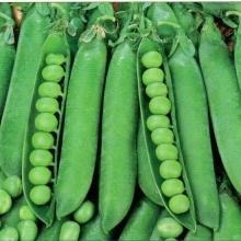 Горох Динга овощной - Семена Тут