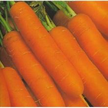 Морковь Бейби F1