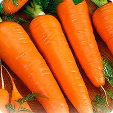 Морковь Сильвано F1 - Семена Тут