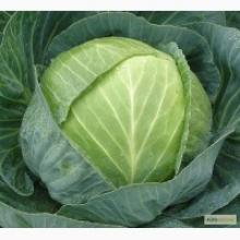 Годжи Биг Лайфберри (С2) (лист зел.,цв. фиол., плоды созр. в июне, красн.цвета, лиана 2-3м)