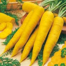 Морковь Еллоустоун F1 желтая