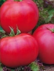 Шелковица черная (C3) (ягоды сине-черные, сладкие)