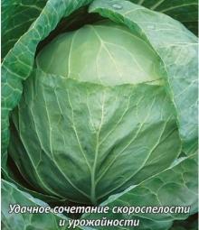 Капуста белокочанная Спринт F1 - Семена Тут