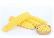 Кукуруза Мирза F1 сахарная - Семена Тут
