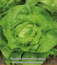 Салат Надин Агро - Семена Тут