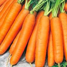 Морковь Берликум Роял (фракция 1,6-1,8 мм) - Семена Тут