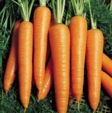 Морковь Вита Лонга - Семена Тут