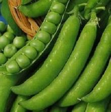 Горох овощной Беркут - Семена Тут