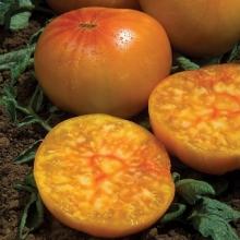 Томат Алтайский оранжевый - Семена Тут