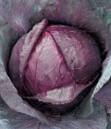 Пион молочноцветковый Боул ов Бьюти (С3) (нежно-розовый с кремовым центром, крупный)