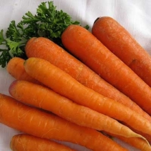 Морковь Наполи F1 - Семена Тут