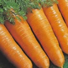 Морковь Витаминная 6 - Семена Тут