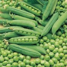 Горох овощной Вега - Семена Тут