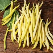 Фасоль овощная Золотая Сакса - Семена Тут
