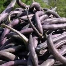 Фасоль овощная Пурпурная королева - Семена Тут