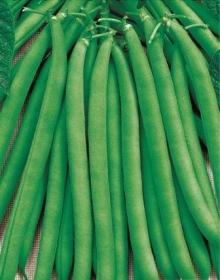 Фасоль овощная Сакса без волокна 615 - Семена Тут