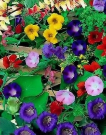 Вьющиеся растения Смесь - Семена Тут