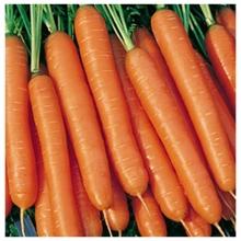 Морковь Император - Семена Тут