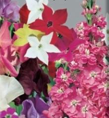 Смесь ароматных цветов Фрагрант - Семена Тут