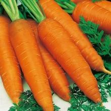 Морковь Королева осени - Семена Тут