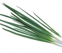 Лук на зелень Легионер - Семена Тут