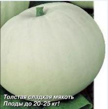 Тыква Крупноплодная 1 - Семена Тут