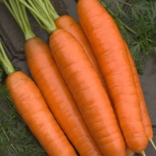 Морковь Лосиноостровская 13 - Семена Тут