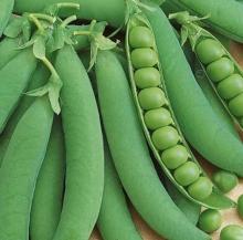 Горох овощной Калипсо - Семена Тут