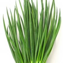 Лук на зелень Энерджи - Семена Тут
