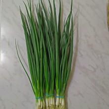 Лук на зелень Гринго - Семена Тут