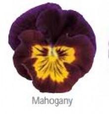 Виола крупноцветковая Ультима Барон Махогани [1000 шт] - Семена Тут