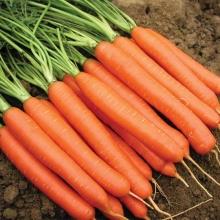 Морковь Нантская - Семена Тут