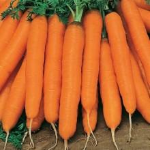 Морковь Мустанг F1 (инкруст. семена) - Семена Тут