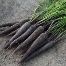 Морковь Пёрпл Сан F1