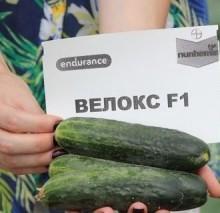 Огурец Велокс F1 - Семена Тут